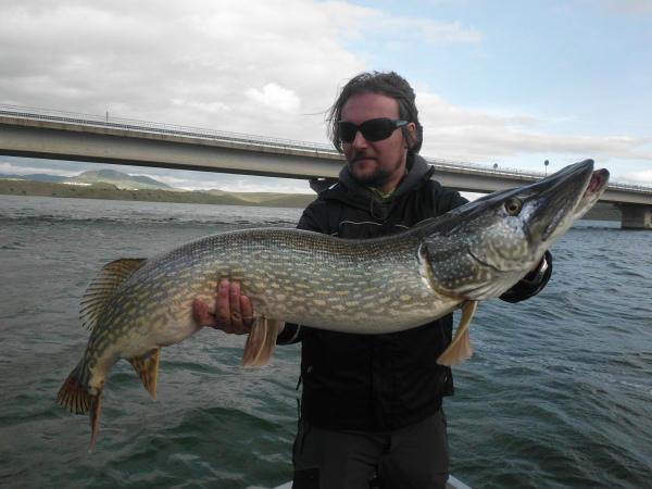 Le plus gros poisson du Mois 1,17 cm!!!